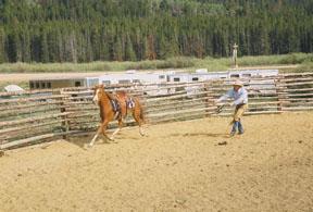 horsetraining (2)