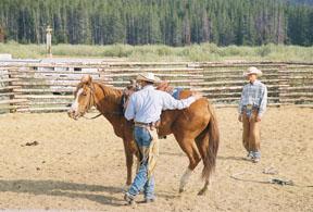 horsetraining (3)