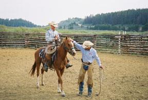 horsetraining (5)